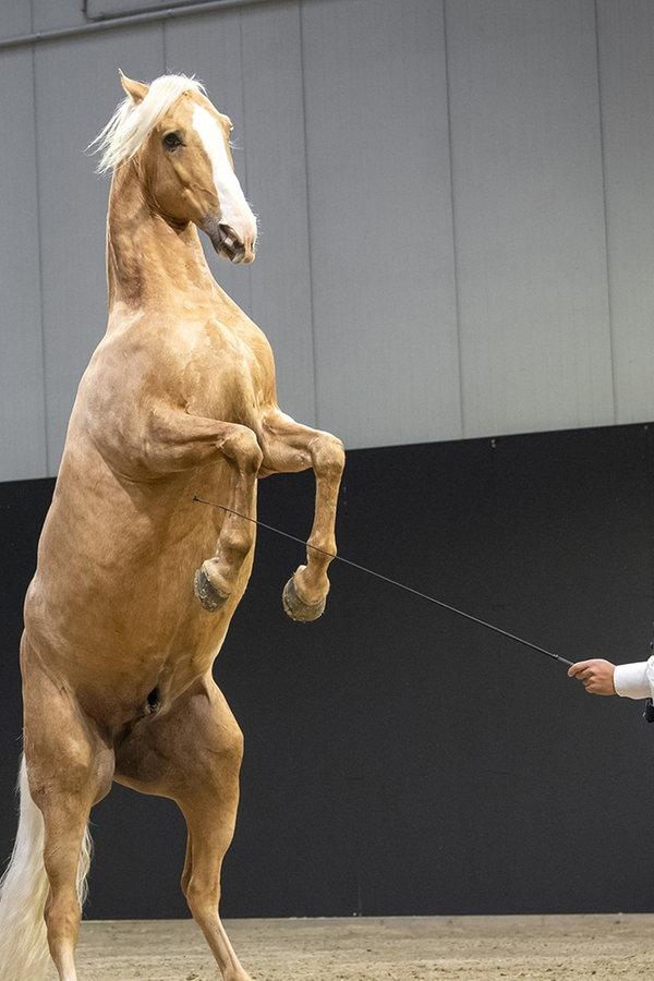 Messe Pferd Jagd geht zu Ende