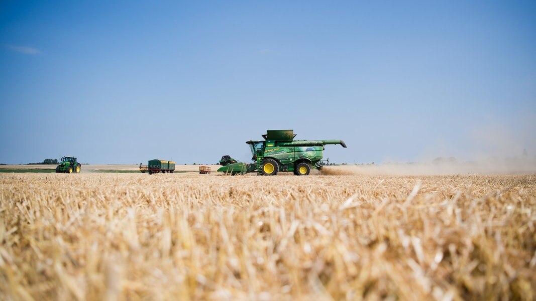 Trockenheit bedroht Existenzen von Bauern