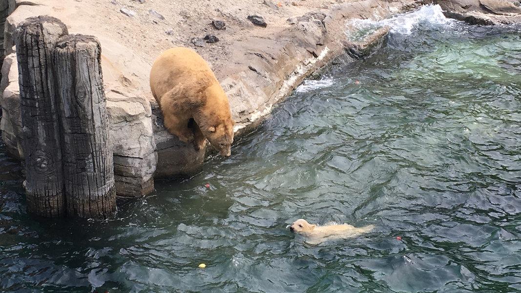 Zoo Niedersachsen Corona