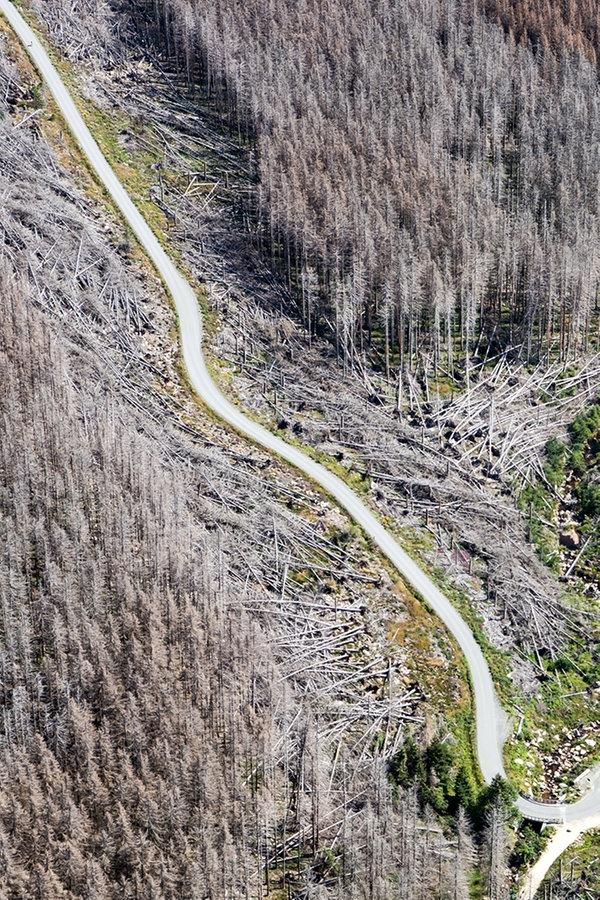 Schäden: Tourismusverband Harz startet Initiative