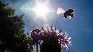 Felder sollen insektenfreundlicher werden