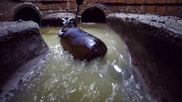 Eine Probenflasche wird in Abwasser in einer Kanalisation gehalten. © NDR
