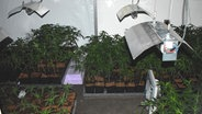 Buchholz: Cannabis-Plantage sichergestellt