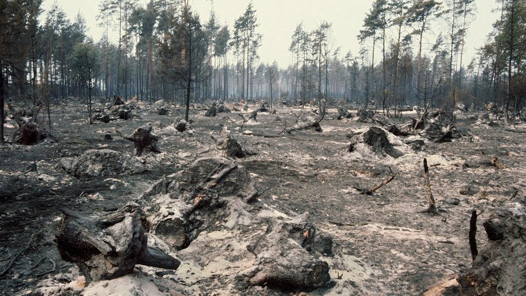 Brand Lüneburger Heide