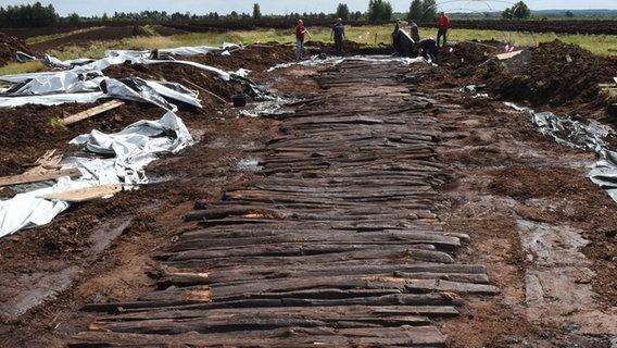 2.000 Jahre alter Bohlenweg wird ausgegraben