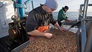 Volle Lager: Niedersachsens Krabbenfischer in Not