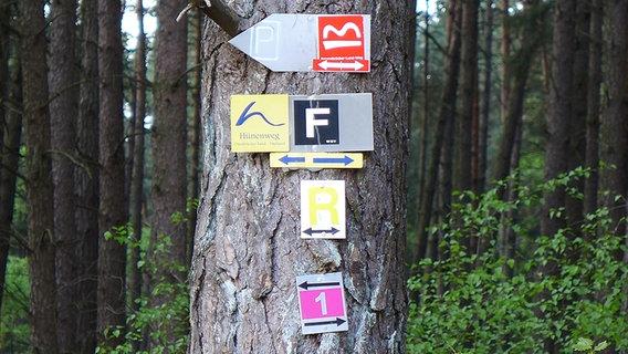 Mehrere Wegweiser für Wanderer an einem Baumstamm.  Foto: Matthias Fußy