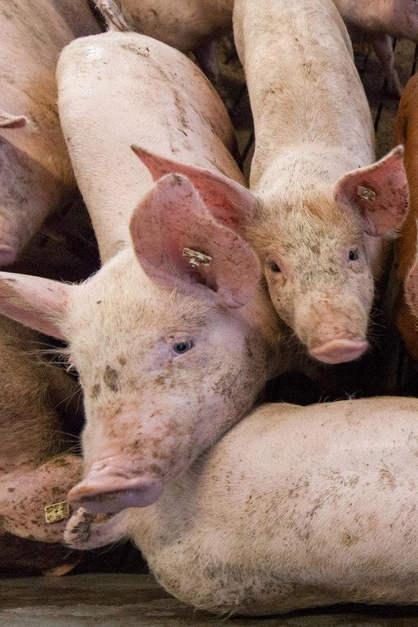 Landwirte ärgern sich über Feinstaub-Studie