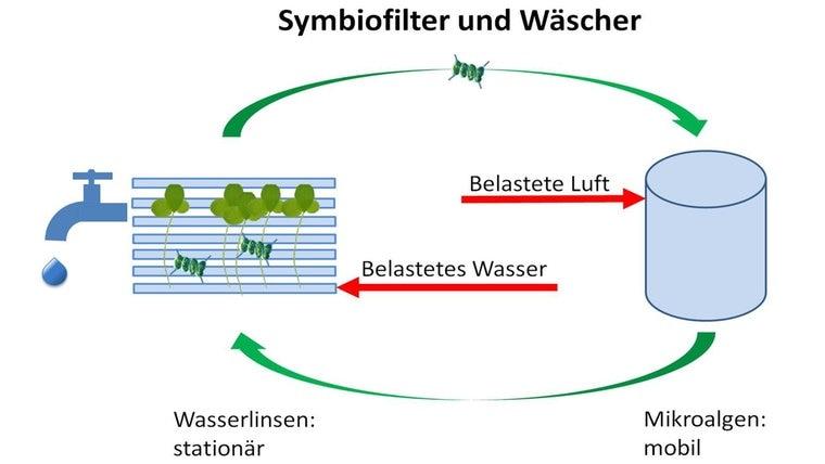 Einer Grafik zeigt einen Symbiofilter und stellt seine Funktionsweise grafisch dar. © Universität Osnabrück & Aqualight GmbH