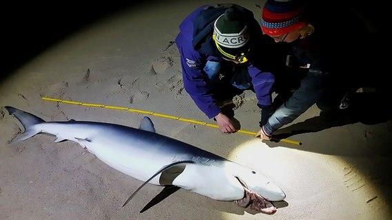 Spaziergänger entdecken toten Blauhai am Strand von Sylt