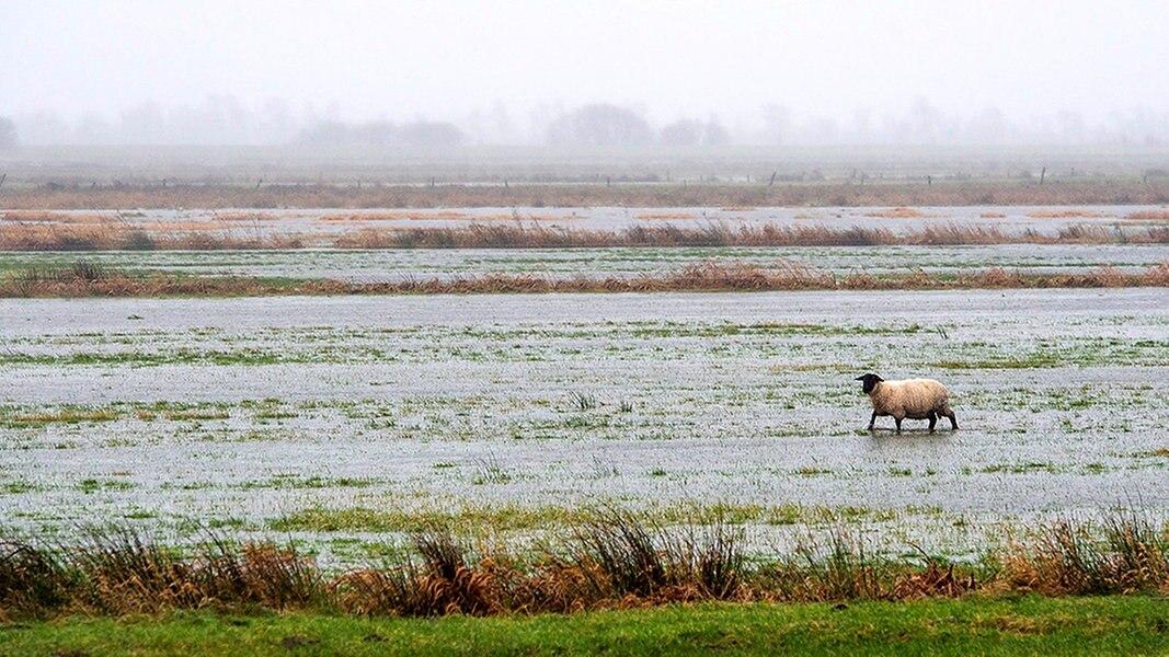 Warum Nur In Schleswig Holstein