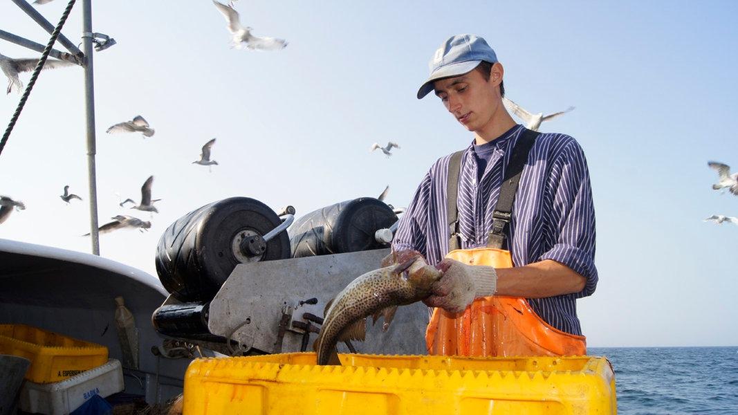 Fangquoten: Fischer in SH sehen ihre Existenz bedroht