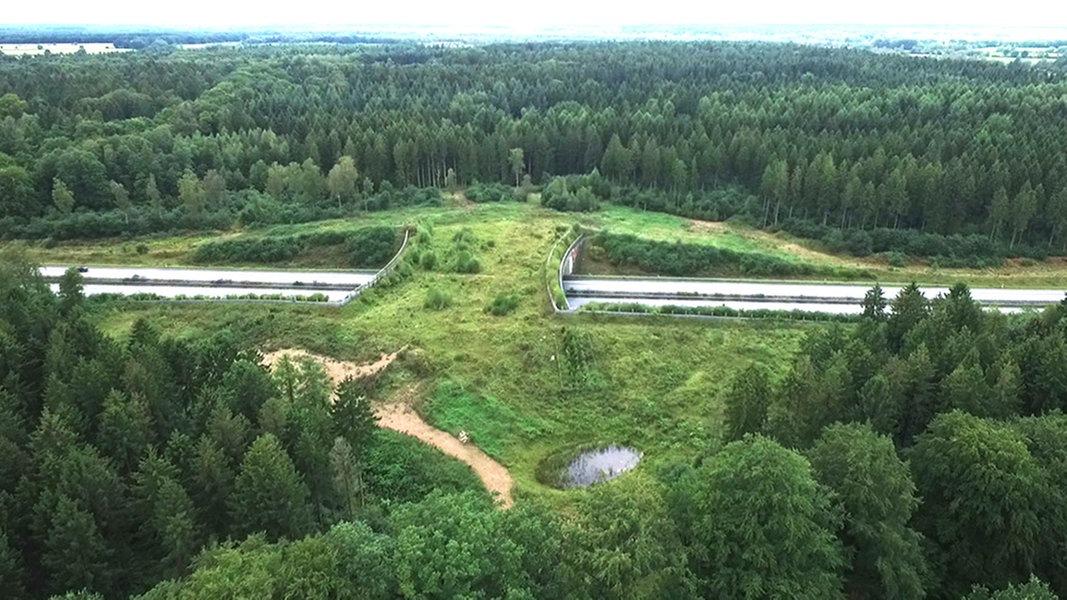 Stiftung Naturschutz wertet Fotofallen aus