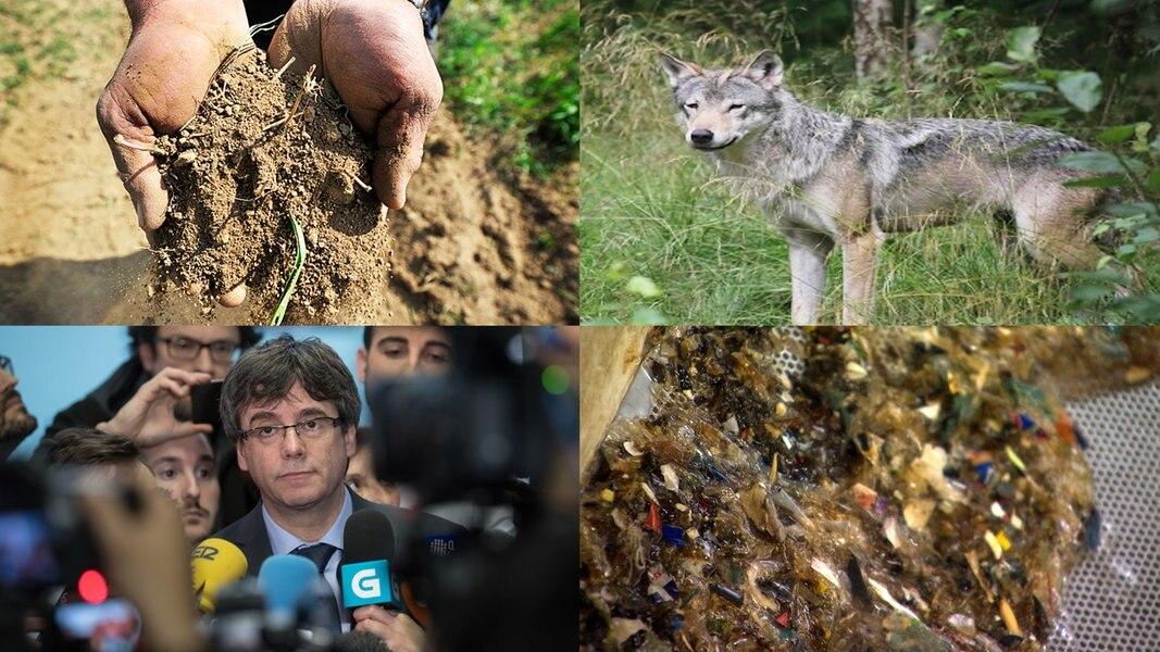 Zur Sache: Super-Sommer und Wolf - das war 2018
