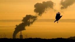 Eine Krähe fliegt kurz nach Sonnenaufgang am Kronsberg, während am Horizont Dampf vom Kohlekraftwerk Mehrum im Landkreis Peine aufsteigt. © dpa-Bildfunk Foto: Julian Stratenschulte