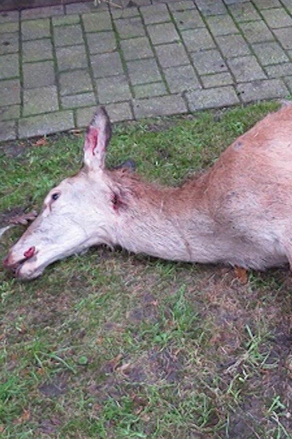 Wildschweinzaun wird zur Todesfalle