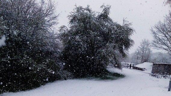 Ein Garten ist mit Schnee bedeckt. © NDR Foto: Sylvia Ebel