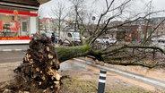 Ein umgestürzter Baum liegt im Kieler Blücherplatz entwurzelt am Straßenrand.  Foto: Frank Molter