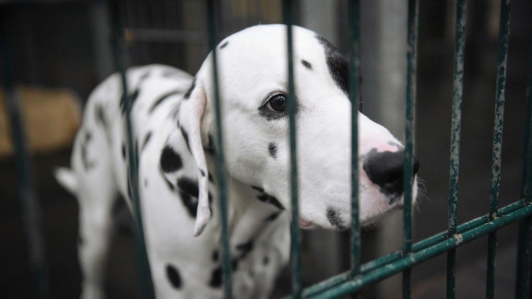 Kommunen streiten über Rügens Tiernotstation
