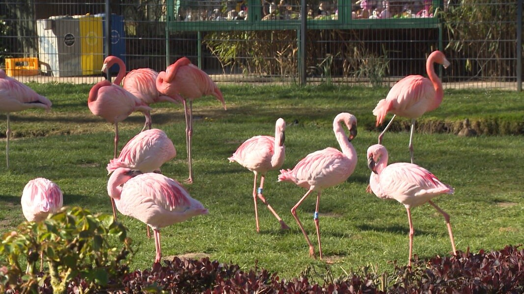 Tierpark Gettorf Corona