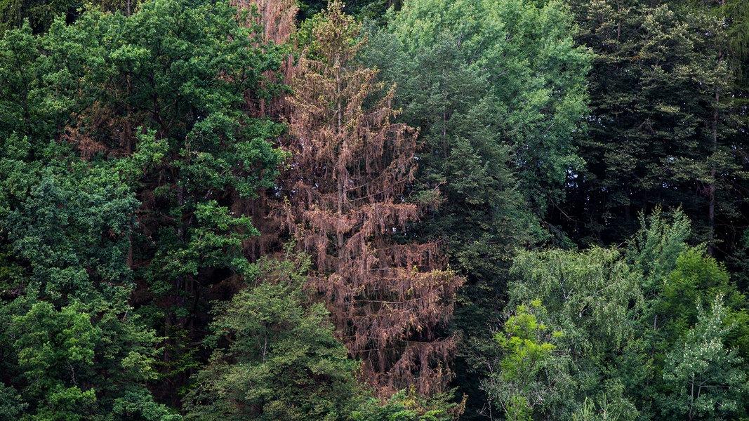 Dürreschäden auf Naturerbe-Flächen in MV