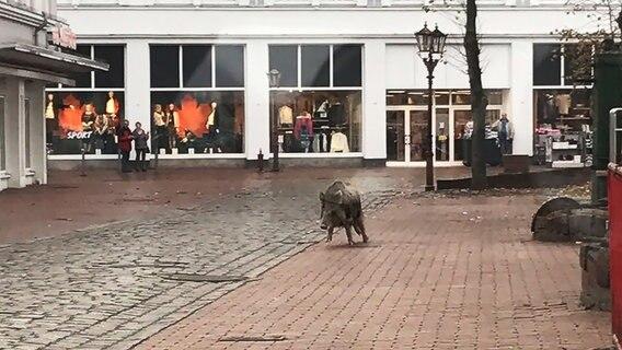 Zwei aggressive Wildschweine verletzen Menschen in Heide
