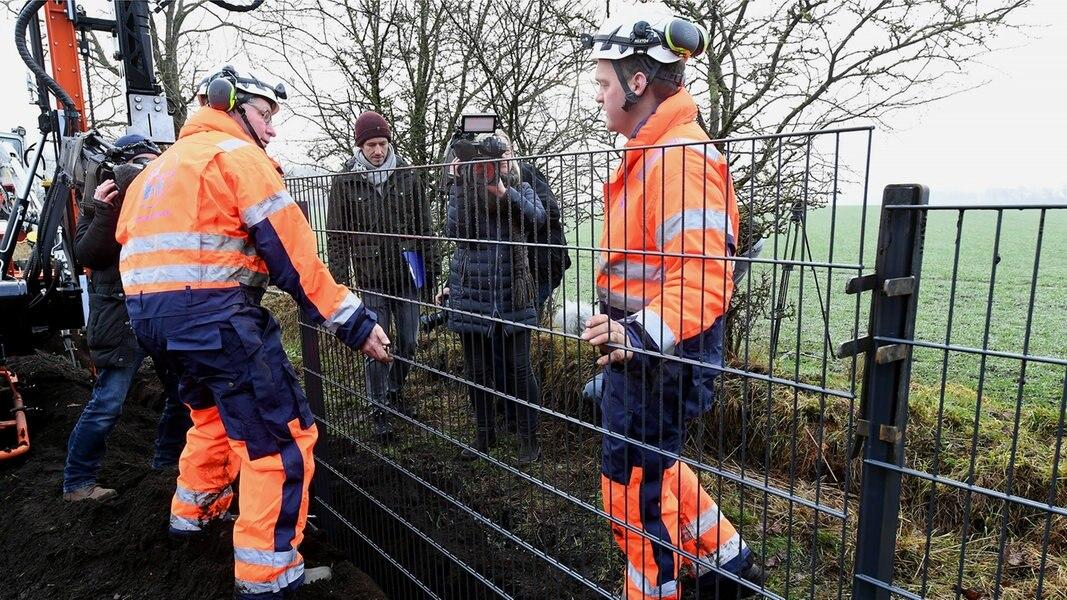 Baubeginn für dänischen Wildschweinzaun