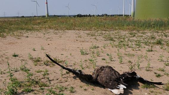 Toter Seeadler neben einer Windkraftanlage. © Staatliche Vogelschutzwarte Brandenburg Fotograf: Silvio Herold