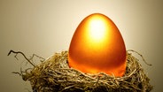Orangefarbenes Ei in einem Nest. © imago/Science Photo Library