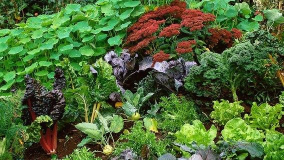 Trend Gemuse Im Blumenbeet Pflanzen Ndr De Ratgeber Garten