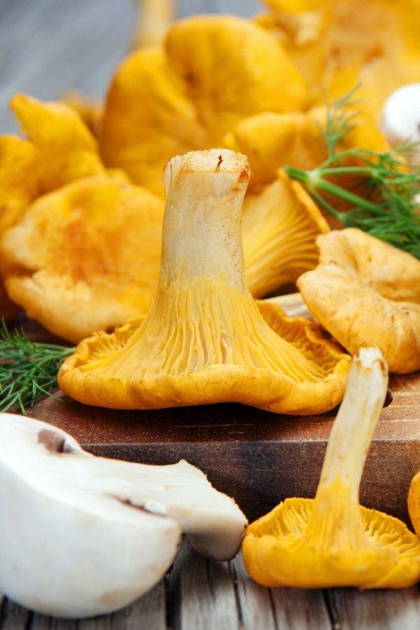 Pilze kaufen und richtig zubereiten