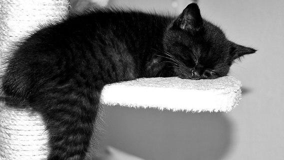 Eine kleine Katze schläft auf einem Kratzbaum.  Foto: NDR.de