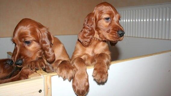 Hunde Aus Dem Internet Tipps Für Käufer Ndrde Ratgeber