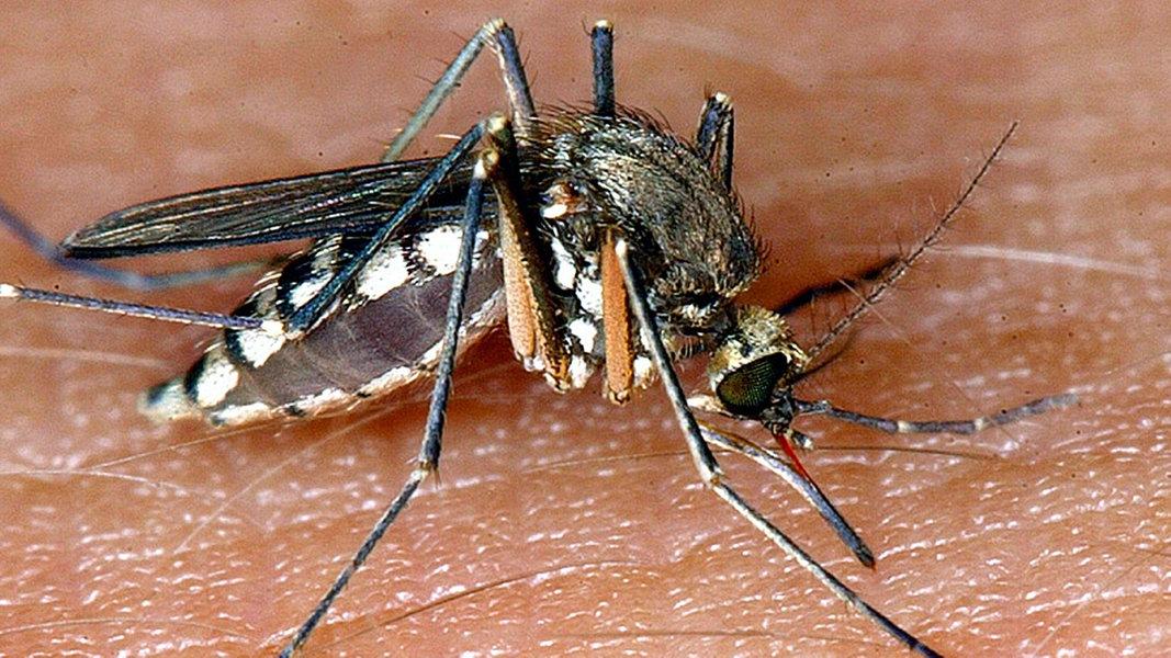 Blutvergiftung Nach Insektenstich