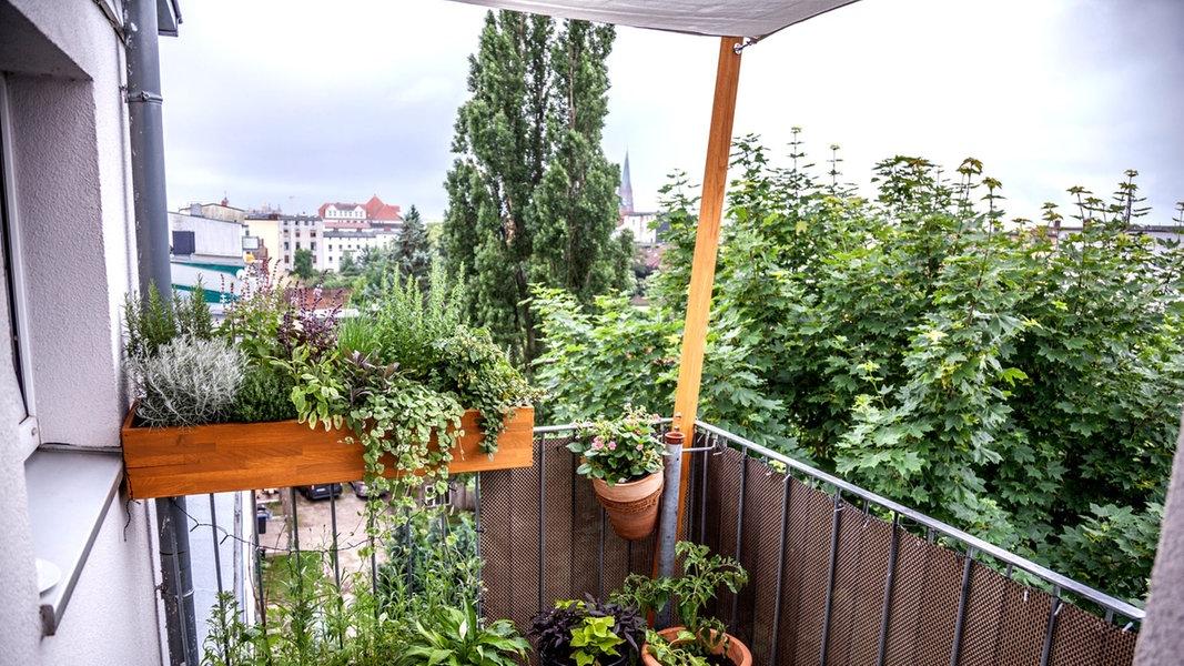 gem se und kr uter auf dem balkon ziehen ratgeber garten nutzpflanzen. Black Bedroom Furniture Sets. Home Design Ideas