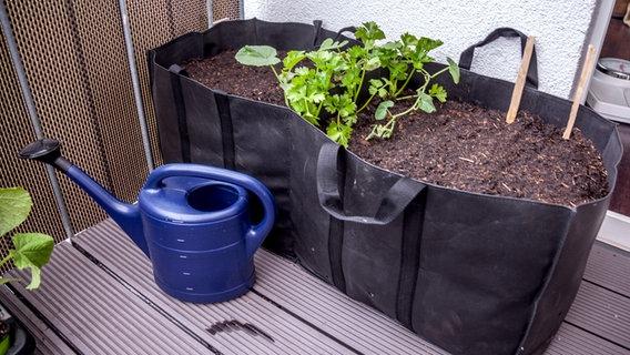 tomaten im k bel auf dem balkon anbauen. Black Bedroom Furniture Sets. Home Design Ideas