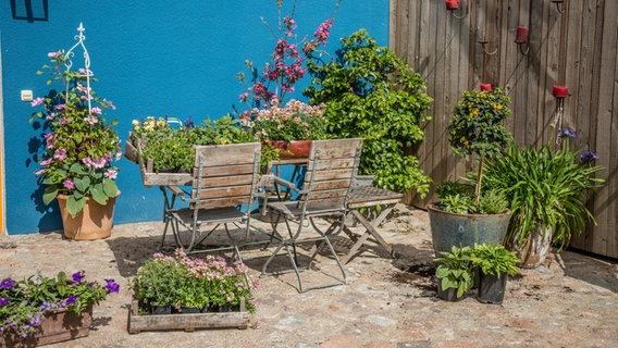 Bienenfreundliche Blumen Fur Den Balkon Ndr De Ratgeber Garten