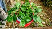 gem se und kr uter auf dem balkon anbauen ratgeber garten nutzpflanzen. Black Bedroom Furniture Sets. Home Design Ideas