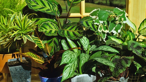 Raumklima mit zimmerpflanzen verbessern for Zimmerpflanzen wohnzimmer