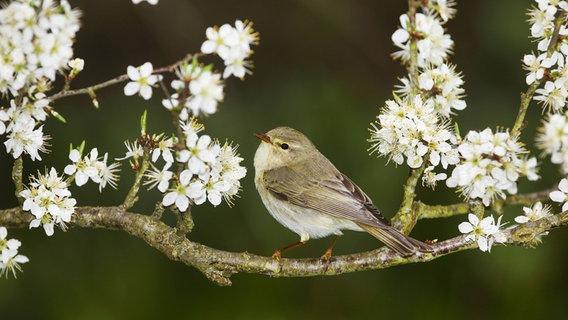 Eine Hecke Fur Vogel Und Insekten Pflanzen Ndr De Ratgeber Garten