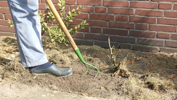 Den Gartenboden bestimmen und verbessern | NDR.de - Ratgeber - Garten
