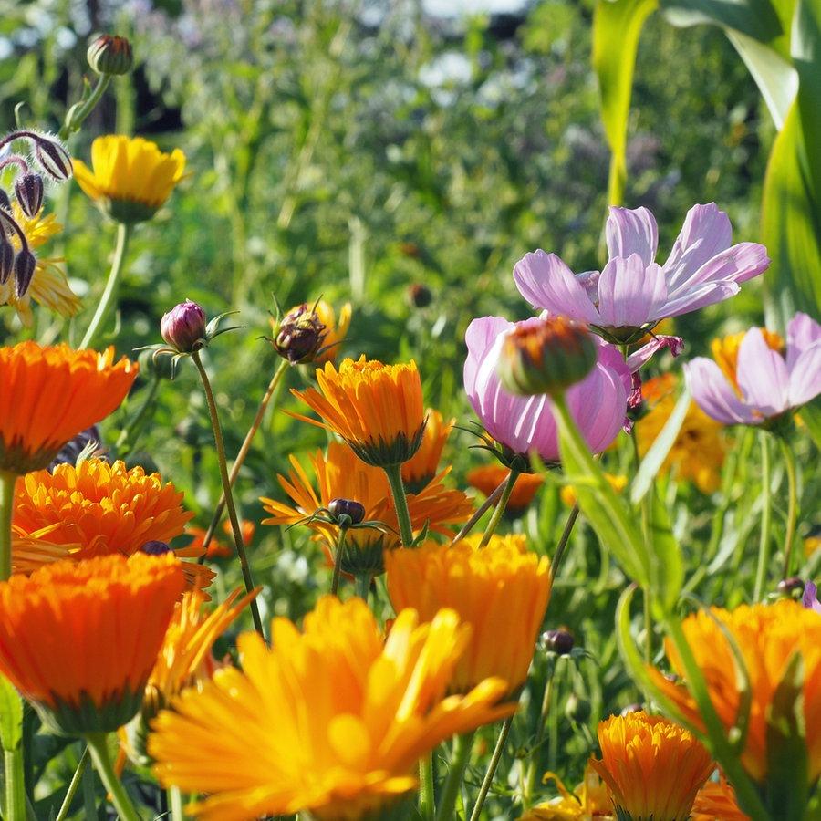 Den Garten dem Klimawandel anpassen   NDR.de   Ratgeber   Garten