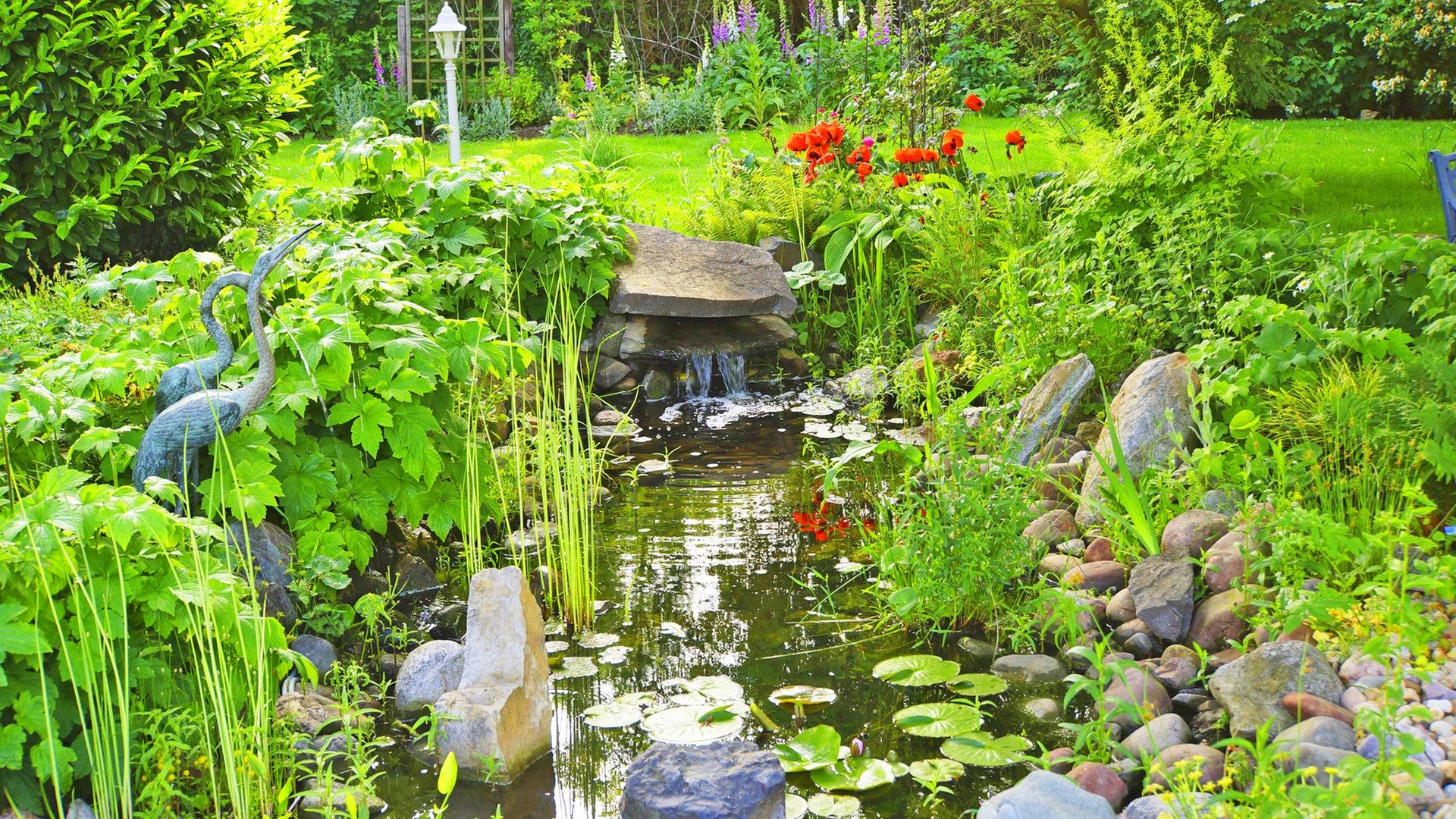 Gartenteich Im Fruhling Reinigen Und Pflegen Ndr De Ratgeber Garten
