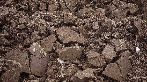 Den Gartenboden Umgraben Oder Lockern Ndrde Ratgeber Garten