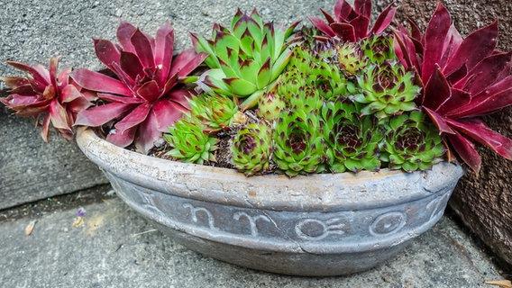 Gartentipps Fur Marz Ndr De Ratgeber Garten Gartenkalender