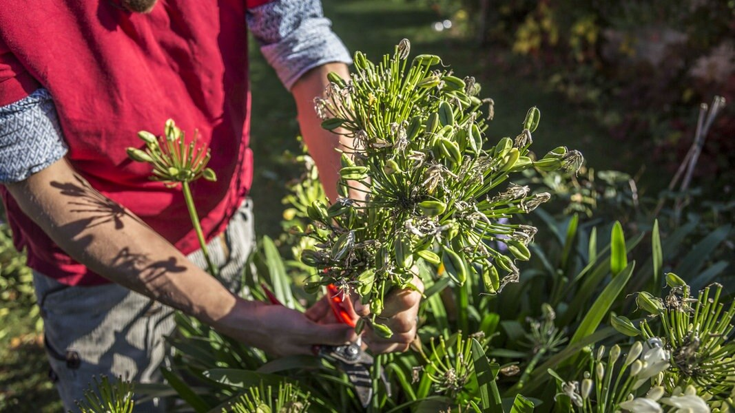 Welche Pflanzen Werden Im Herbst Geschnitten Ndr De Ratgeber