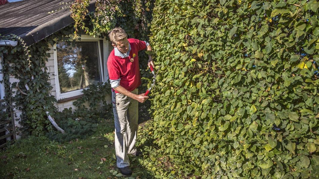 Herbstschnitt Wie Sie Pflanzen Richtig Schneiden Ndr De