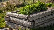 Ein Hochbeet anlegen und Gemüse pflanzen