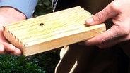 larven des dickmaulr sslers bek mpfen ratgeber garten sch dlinge. Black Bedroom Furniture Sets. Home Design Ideas