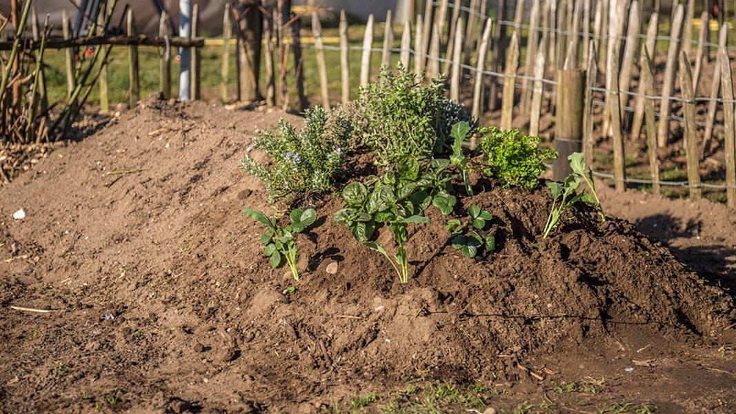 Aus Gartenabfällen Ein Hügelbeet Anlegen | NDR.de   Ratgeber   Garten    Nutzpflanzen